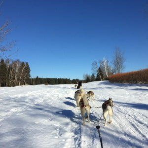 Rondreis Canada Hondenslee (2)